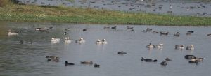 Patna Bird Sanctuary: An Oasis for Bird Watchers