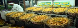 Common North Indian Fruits to Relish