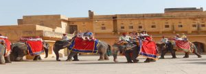 Amer Fort History, Timings & Updates