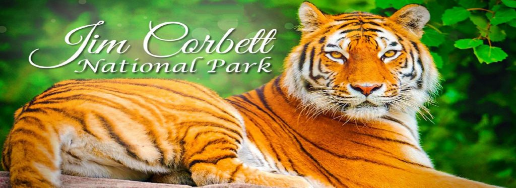 Jim Corbett National Park- Complete Travel Tips